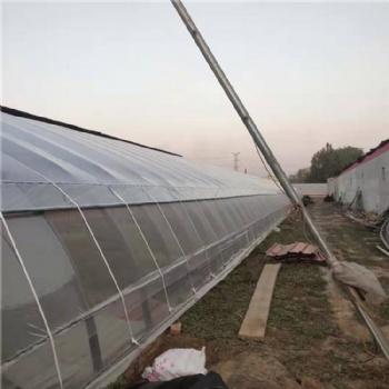 日光温室 连栋温室大棚 温室承建