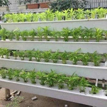 三亚华耀温室番茄育苗无土栽培