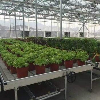 供应兰州华耀温室土豆育苗CN-98潮汐苗床潮汐灌溉