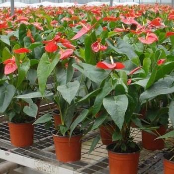 长岛县花卉温室蝴蝶兰种植移动式苗床镀锌是苗床