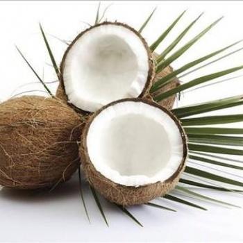 佛山市椰子水果类供应