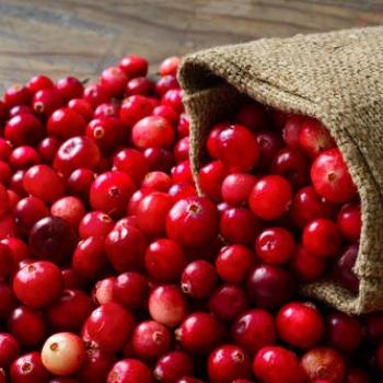 佛山市蔓越莓水果供应