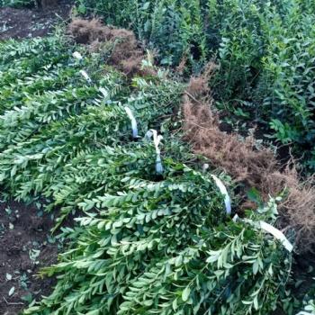 辽宁草坪灌木开花小树卖便宜开始绿价格秦皇岛草吉林